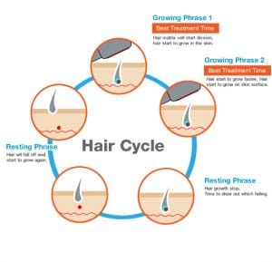 Human Hair Cycle